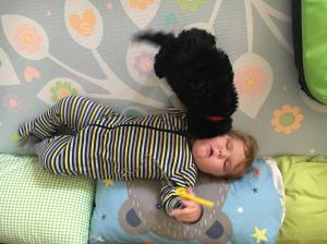 blog a 2 puppy