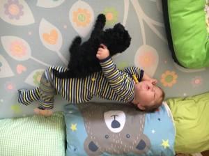blog a puppy